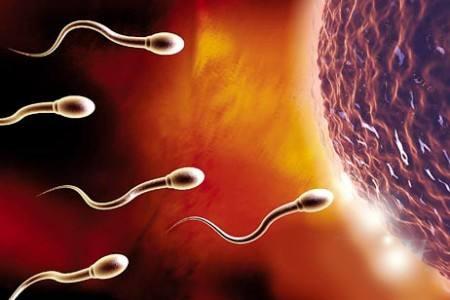 宝岛精片让男人备孕率增倍